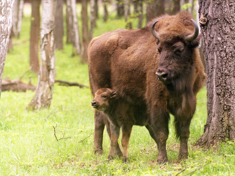 Фауна Беларуси - Млекопитающие Беларуси