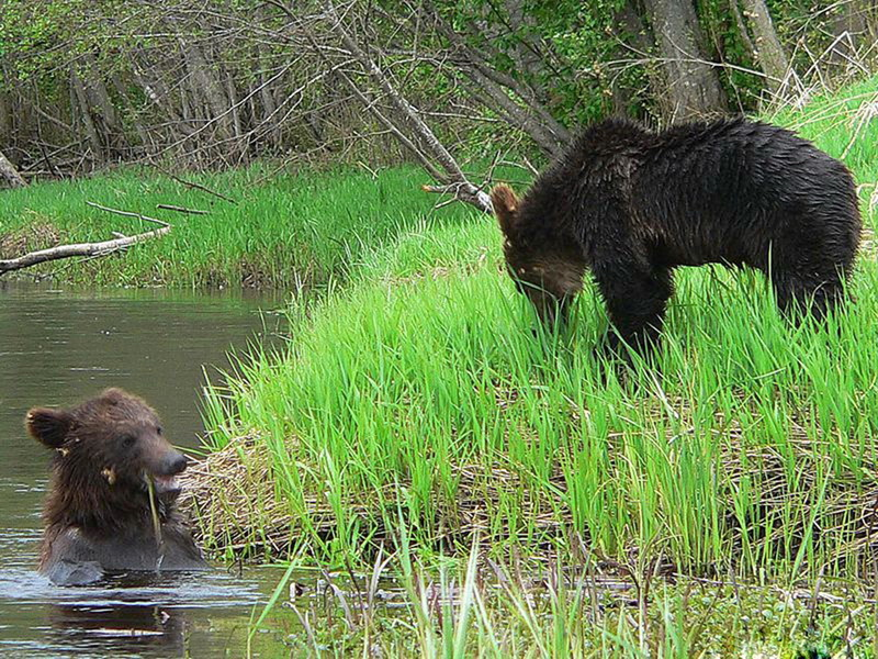 Национальные парки и заповедники Беларуси