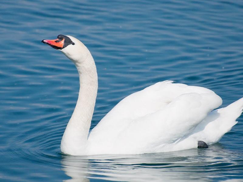 Фауна Беларуси - Птицы Беларуси