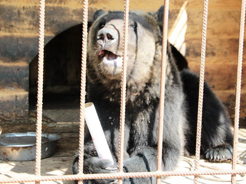 Зоопарки и зоосады Беларуси