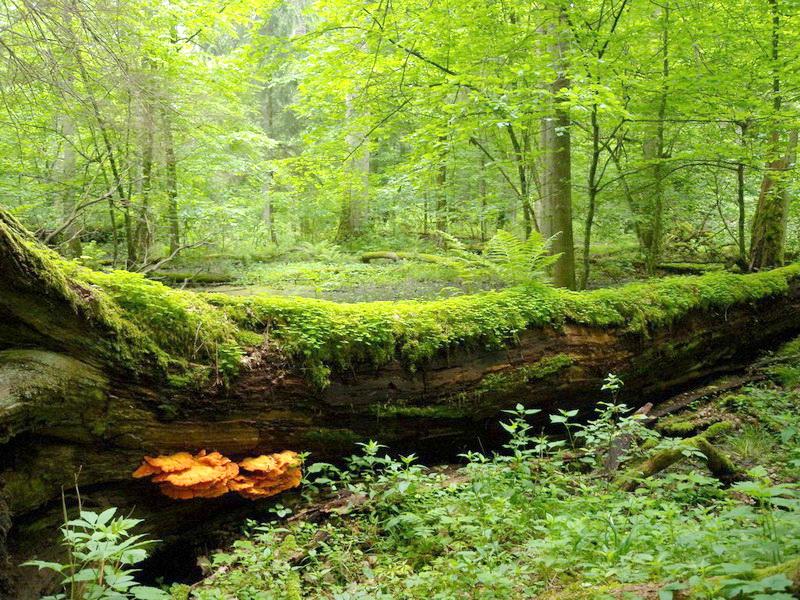 Заповедные места Беларуси - Флора Беларуси