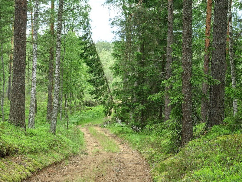 Леса Беларуси - Флора Беларуси