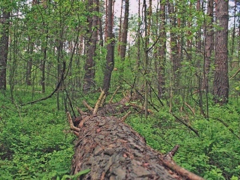 Биосферный резерват Прибужское Полесье