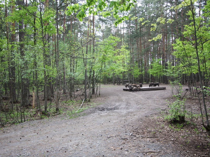 НП Припятский